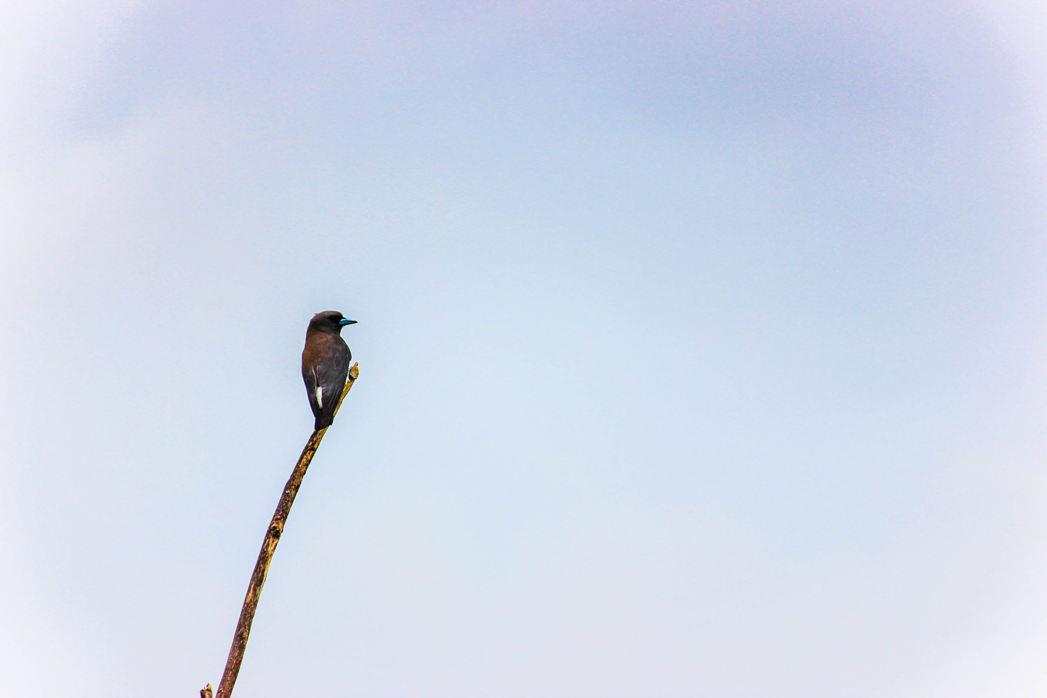 Free stock photo of bird, nature, tree branch