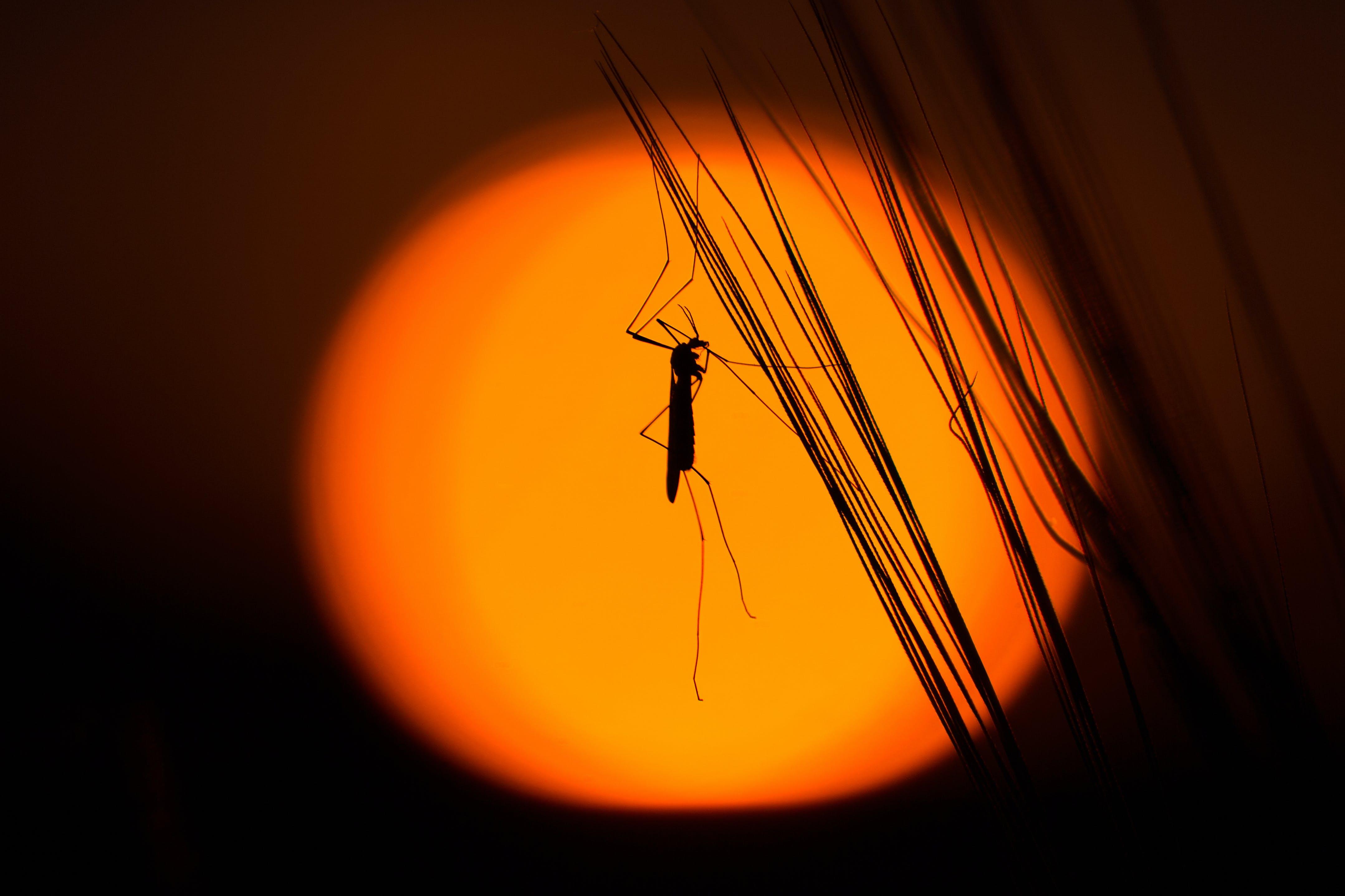 Kostenloses Stock Foto zu grashüpfer, insekt, silhouette