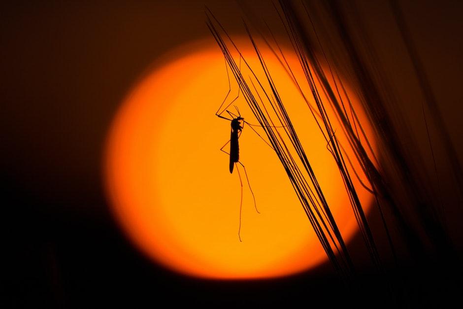 grasshopper, insect, silhouette