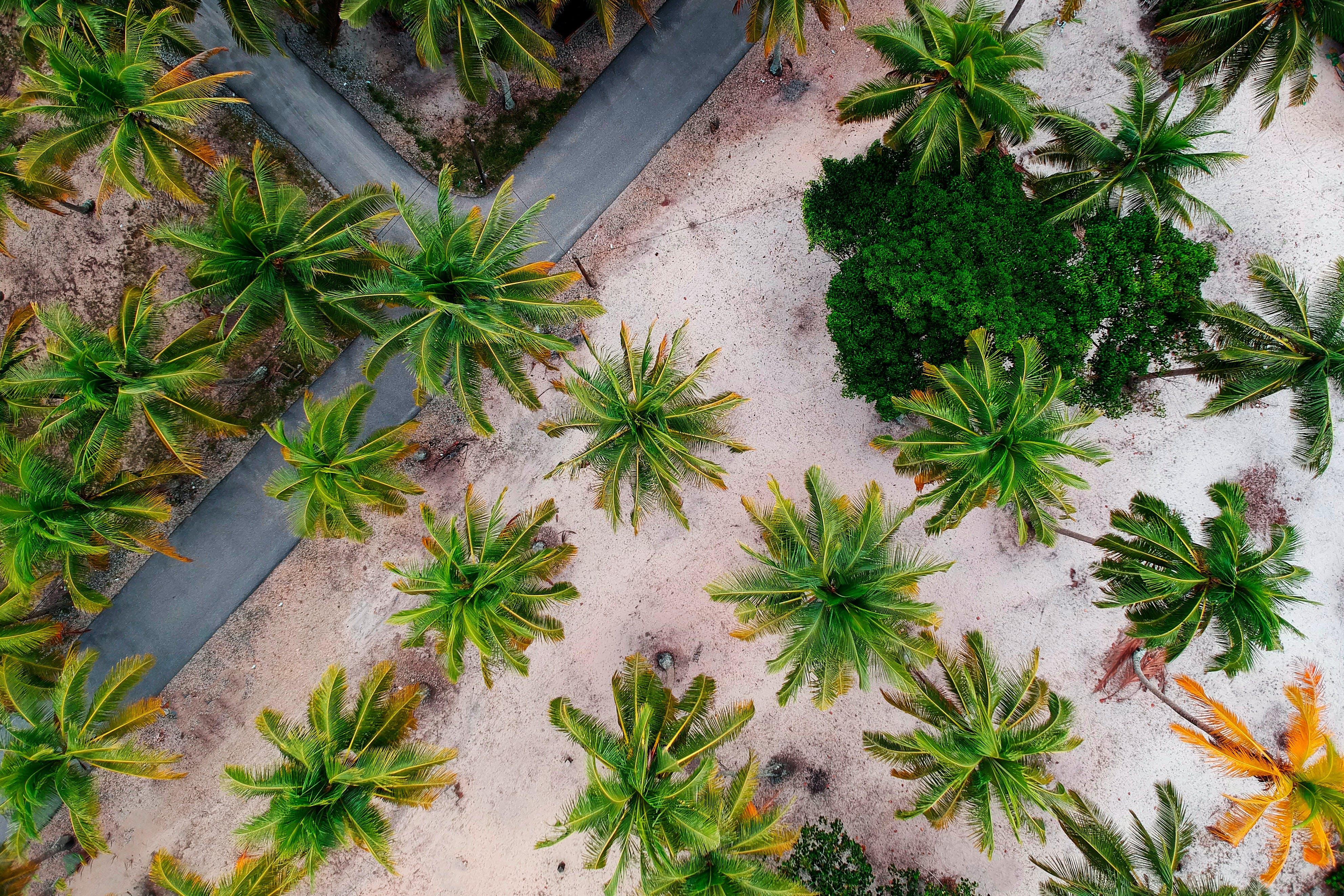 Základová fotografie zdarma na téma letecký snímek, palmy, ptačí perspektiva, shora