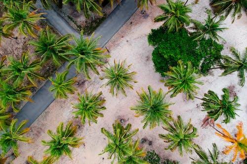 Darmowe zdjęcie z galerii z drzewa, palmy, widok z lotu ptaka, z góry