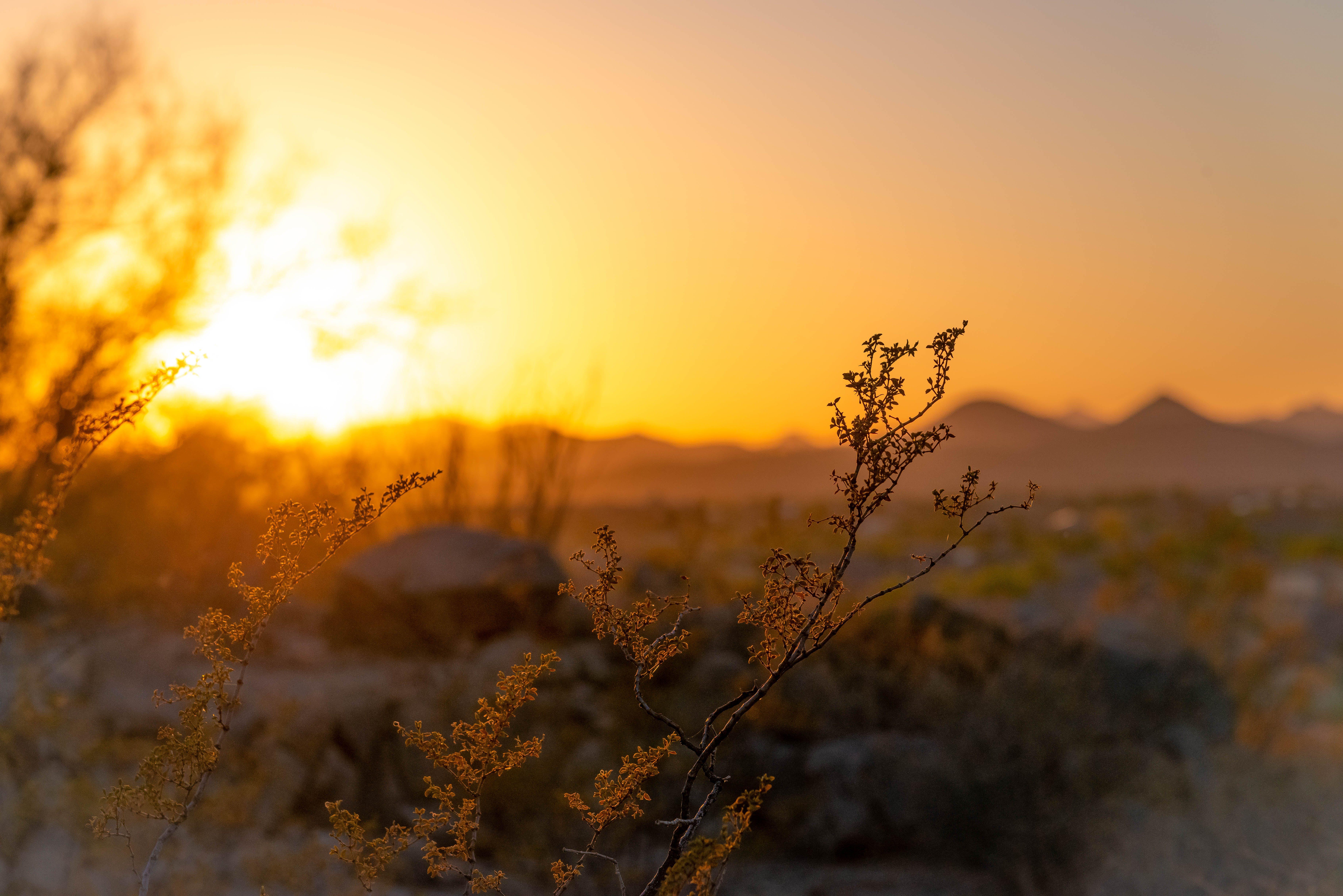 คลังภาพถ่ายฟรี ของ ชั่วโมงทอง, ดวงอาทิตย์, ตะวันลับฟ้า, ต้นไม้