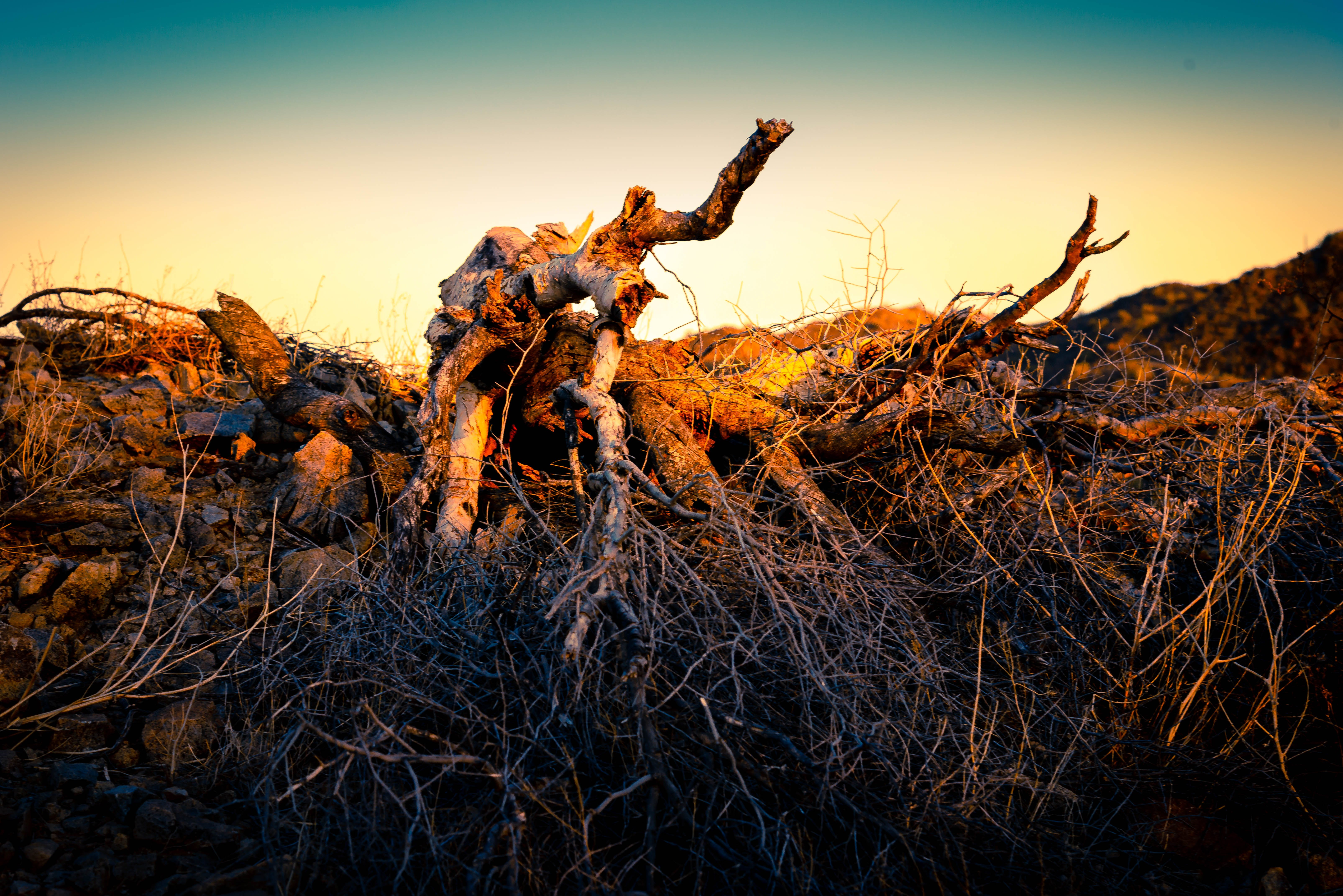 Free stock photo of desert, branches, tree trunk, dead tree