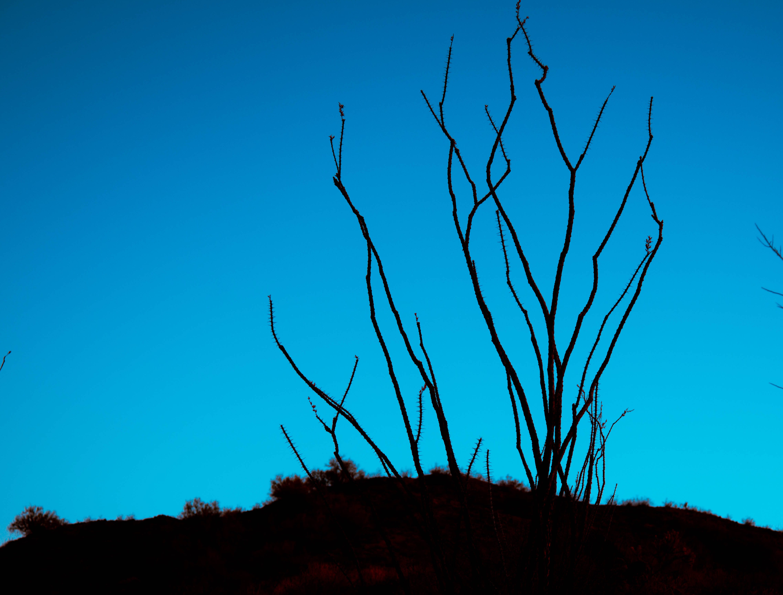 Free stock photo of branches, cactus, desert, night