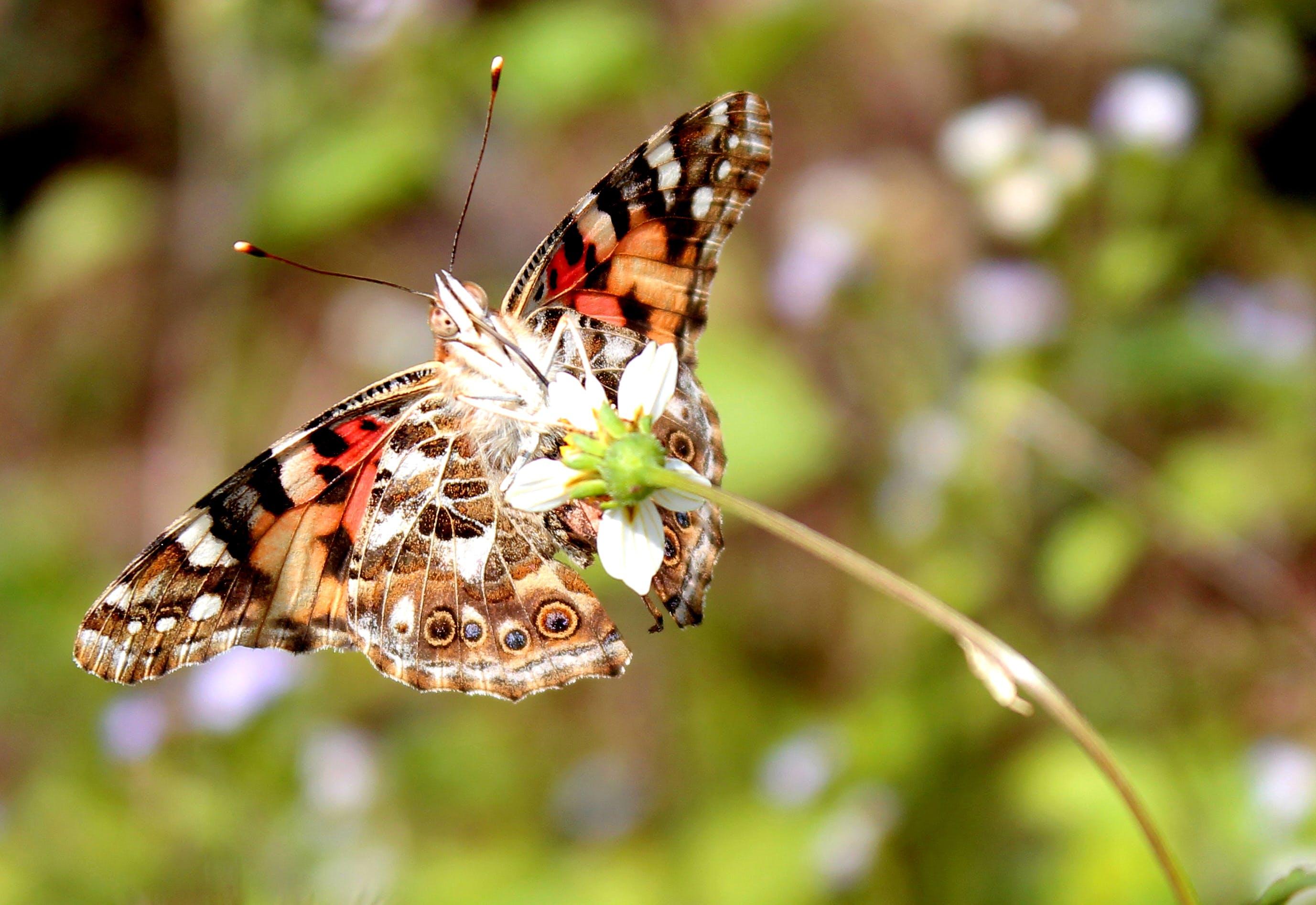 Free stock photo of #adventure, #bug, #butterfly, #Macro