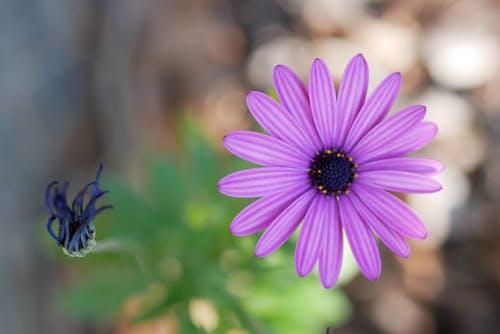 Free stock photo of macro, purple, purple flower