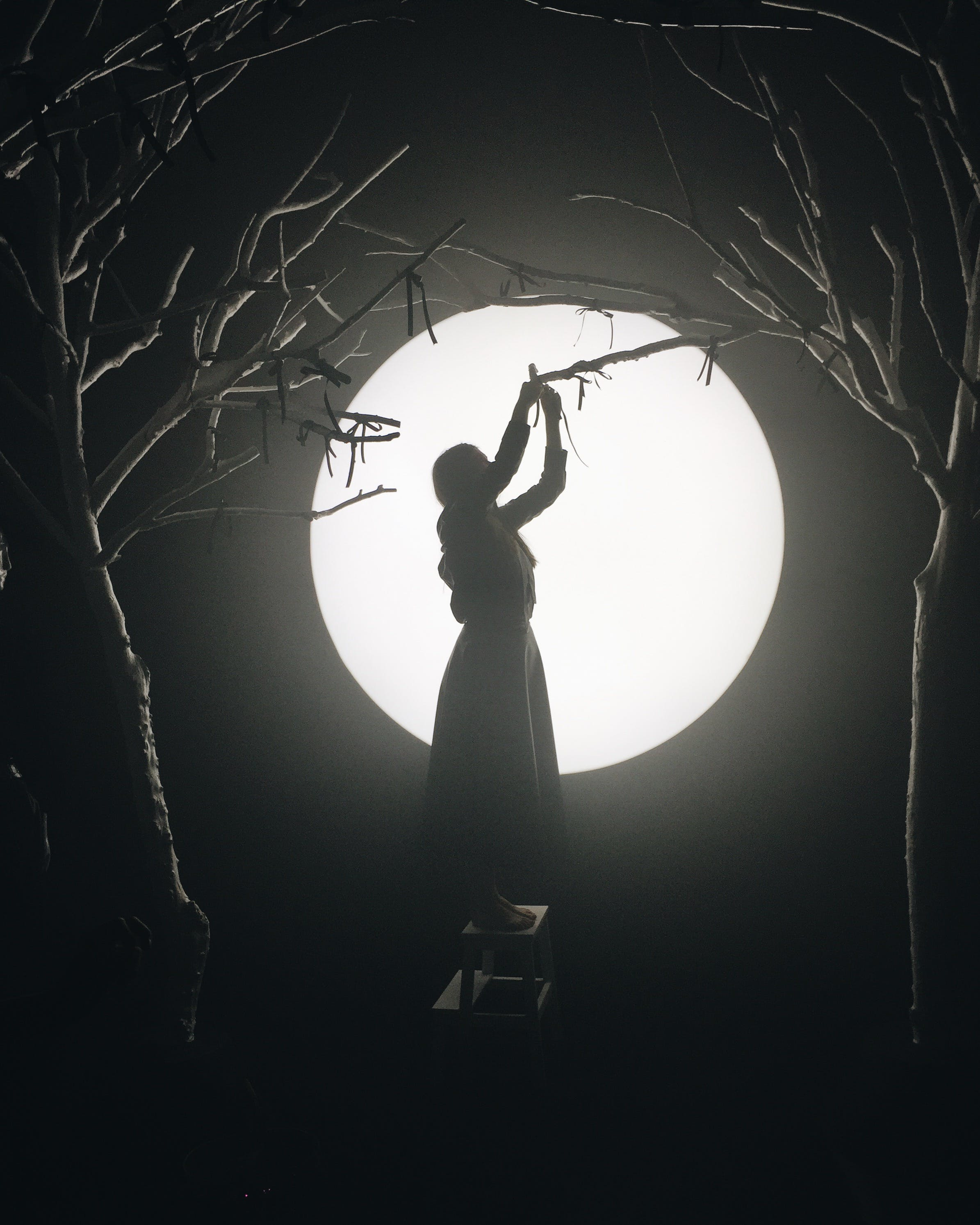Free stock photo of night, girl, forest, tree