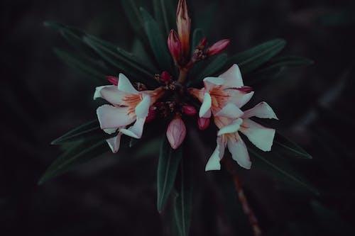 꽃, 꽃다발, 꽃봉오리, 꽃이 피는의 무료 스톡 사진