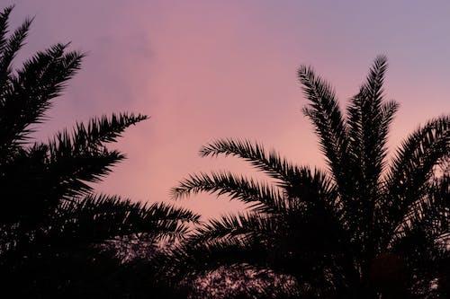 Imagine de stoc gratuită din #copac, apus, canonul 80d, cer