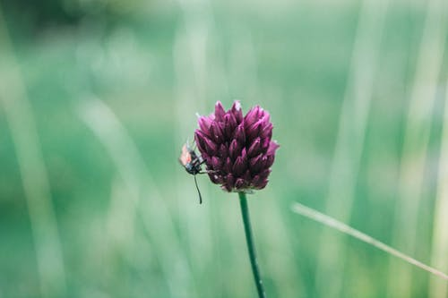 Foto stok gratis #nature #bug #green #flower