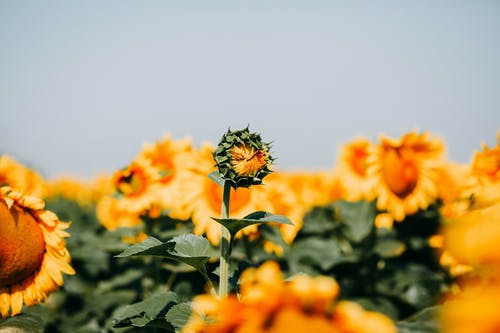 Foto profissional grátis de área, broto, flora, floração