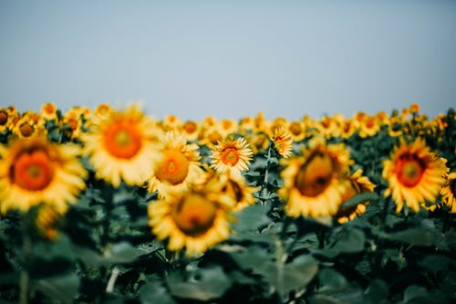 Photos gratuites de clairière, ensoleillé, fleurir, fleurs
