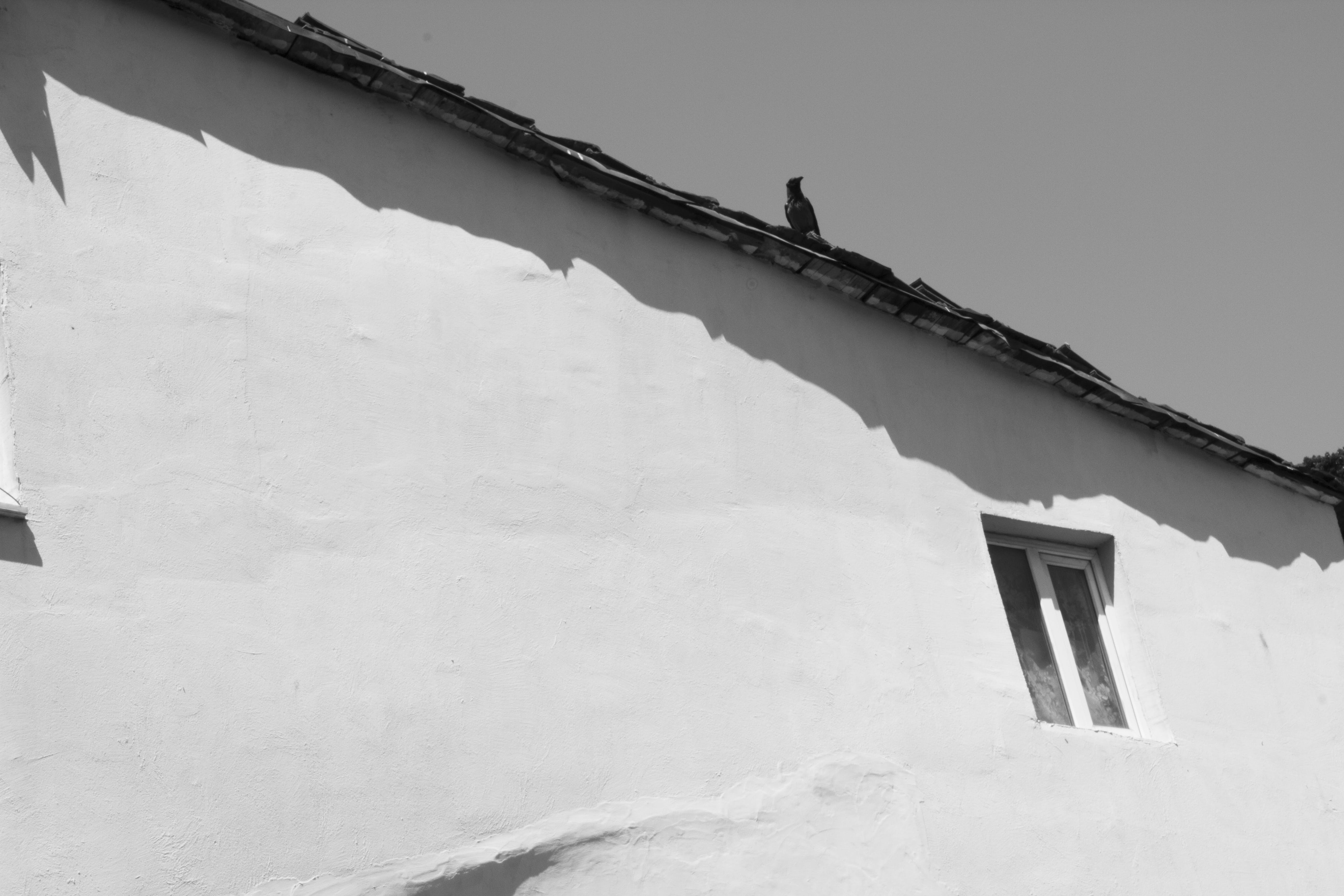 Free stock photo of black and white, crow, wall