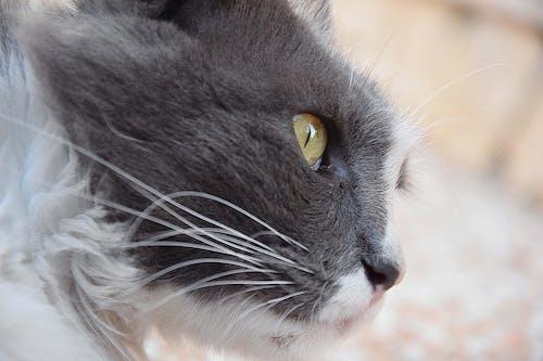 Free stock photo of blur, cat, detail