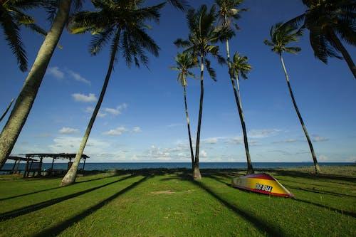 ağaçlar, çim, deniz kıyısı, doğa içeren Ücretsiz stok fotoğraf