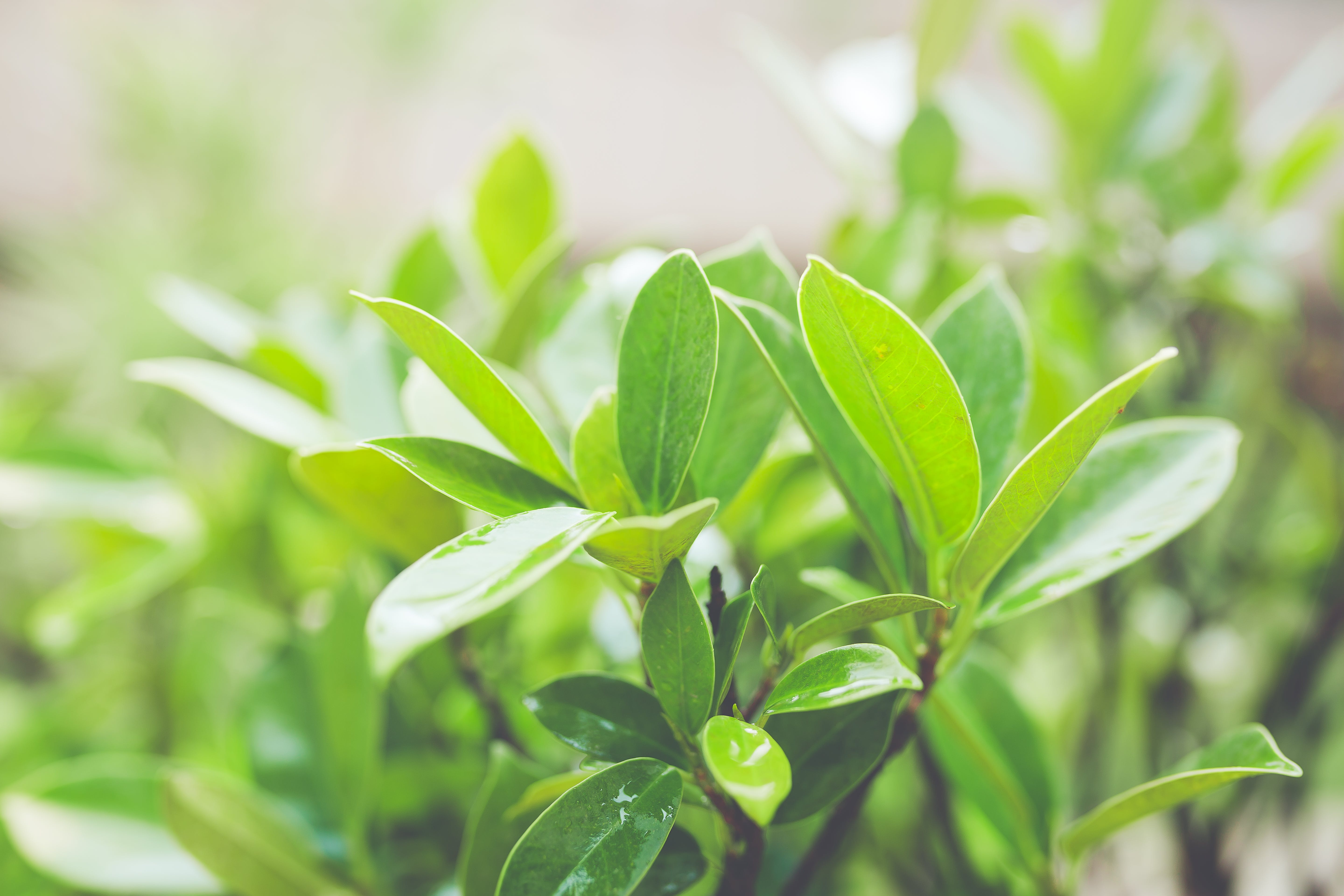 Close-Up Photography of Green Leaves