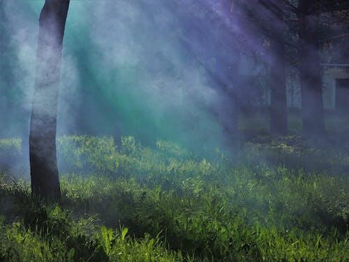 Foto stok gratis #kabut, #naturechallenge, #outdoorchallenge, #pohon