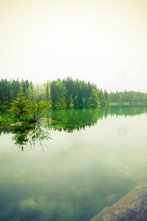 Free stock photo of fog, forest, lake, landscape