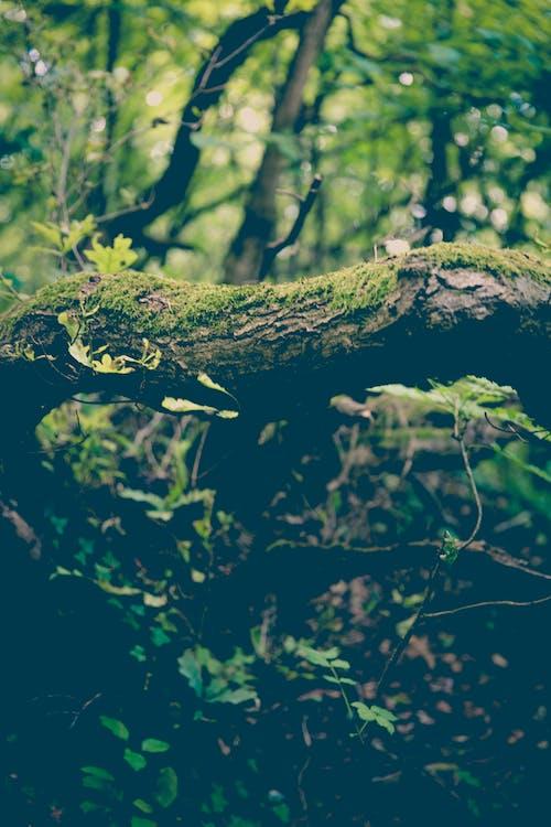 Imagine de stoc gratuită din arbori, codru, crengi, culori