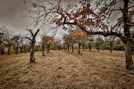 landscape, nature, field