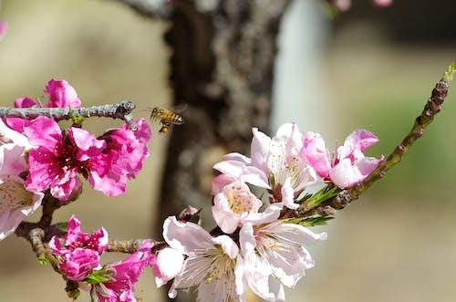 Foto profissional grátis de abelha, árvore, broto, filial