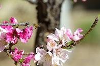 flowers, petals, tree