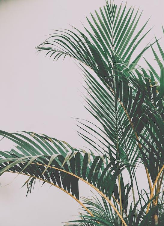 liść palmy, liść paproci, roślina