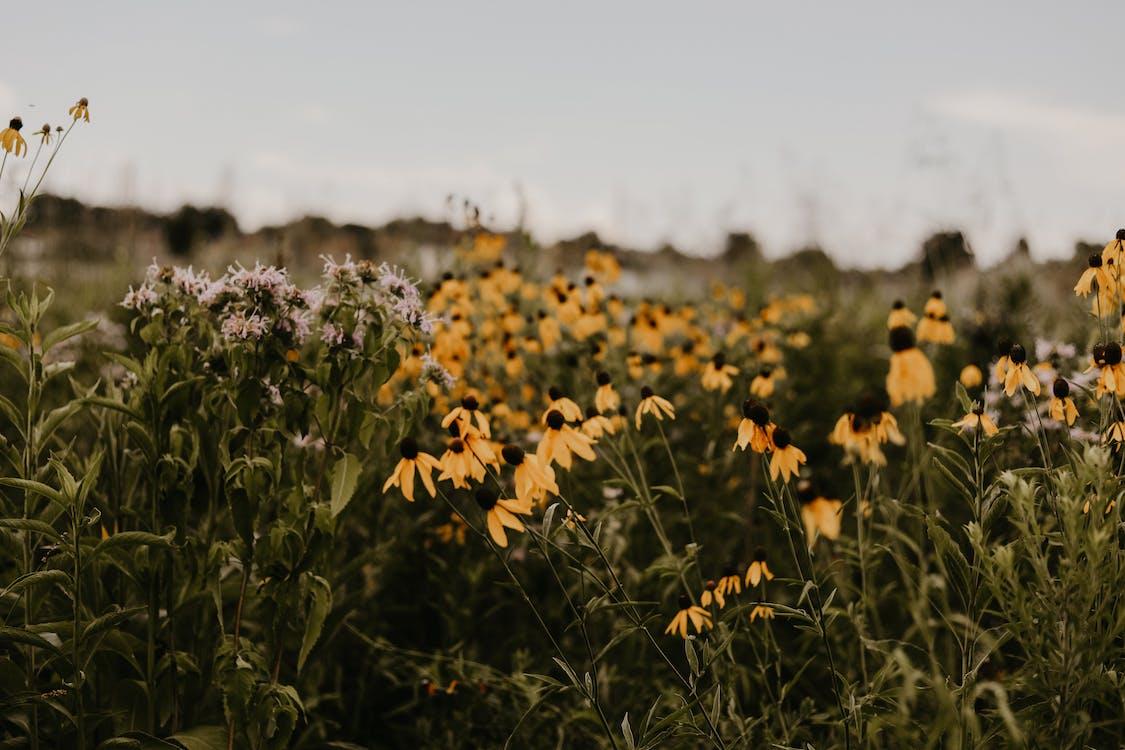 浅い写真の花