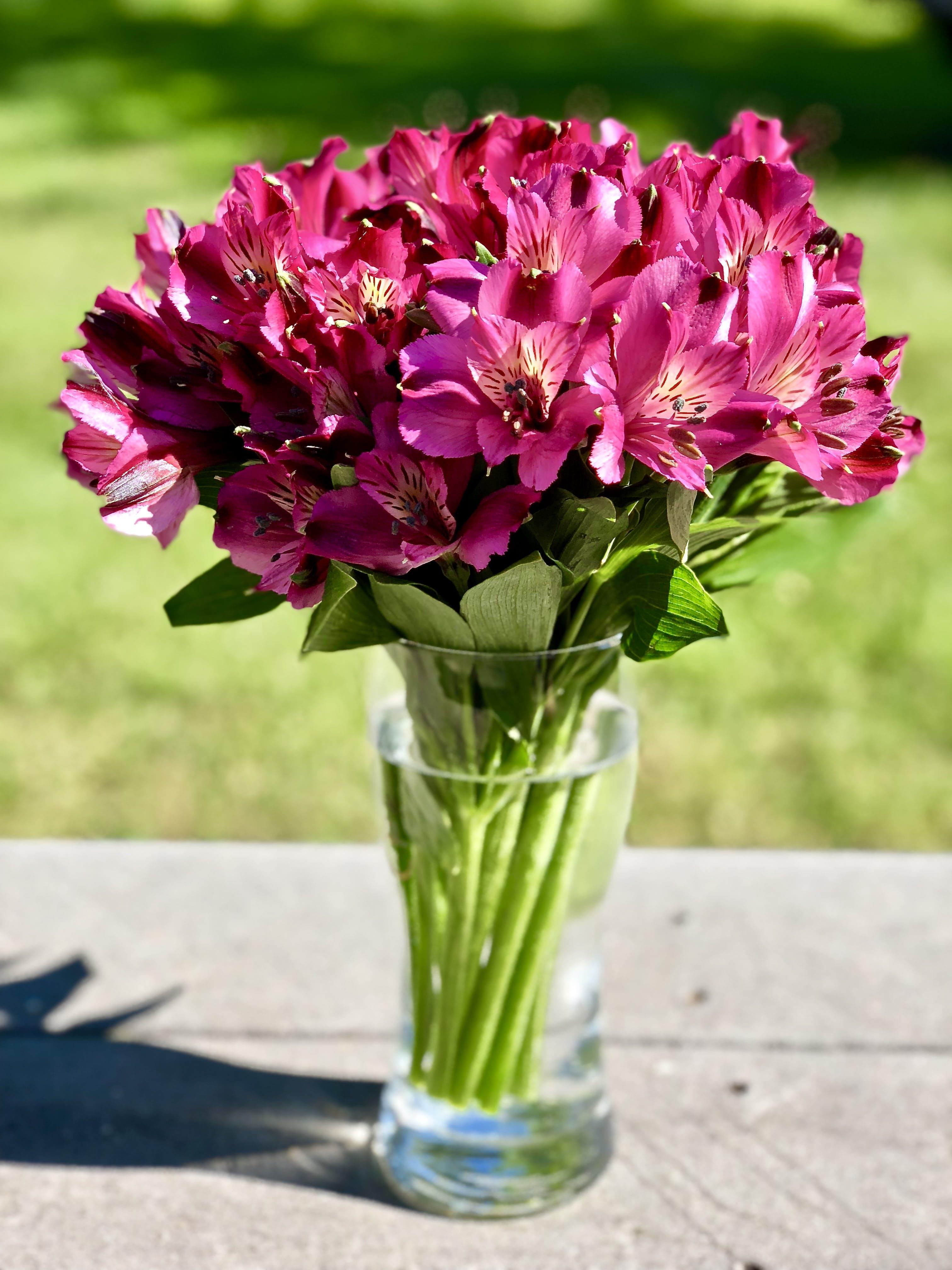 Δωρεάν στοκ φωτογραφιών με αγάπη, λουλούδια, πράσινος, ρομαντικός