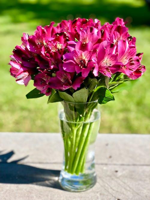 Základová fotografie zdarma na téma květiny, láska, příroda, romantický