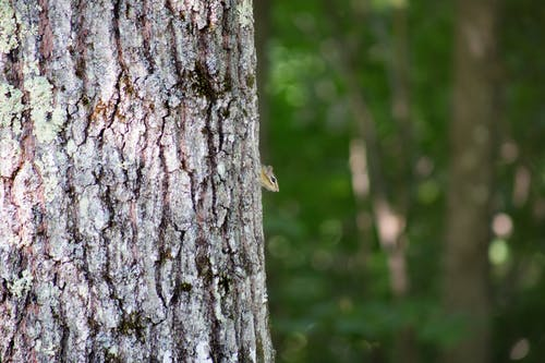 Δωρεάν στοκ φωτογραφιών με γαβγίζω, δέντρο, ζώο, ημέρα