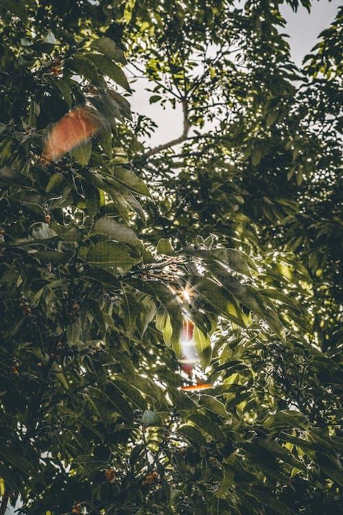 Imagine de stoc gratuită din arbore, crengi, plantă