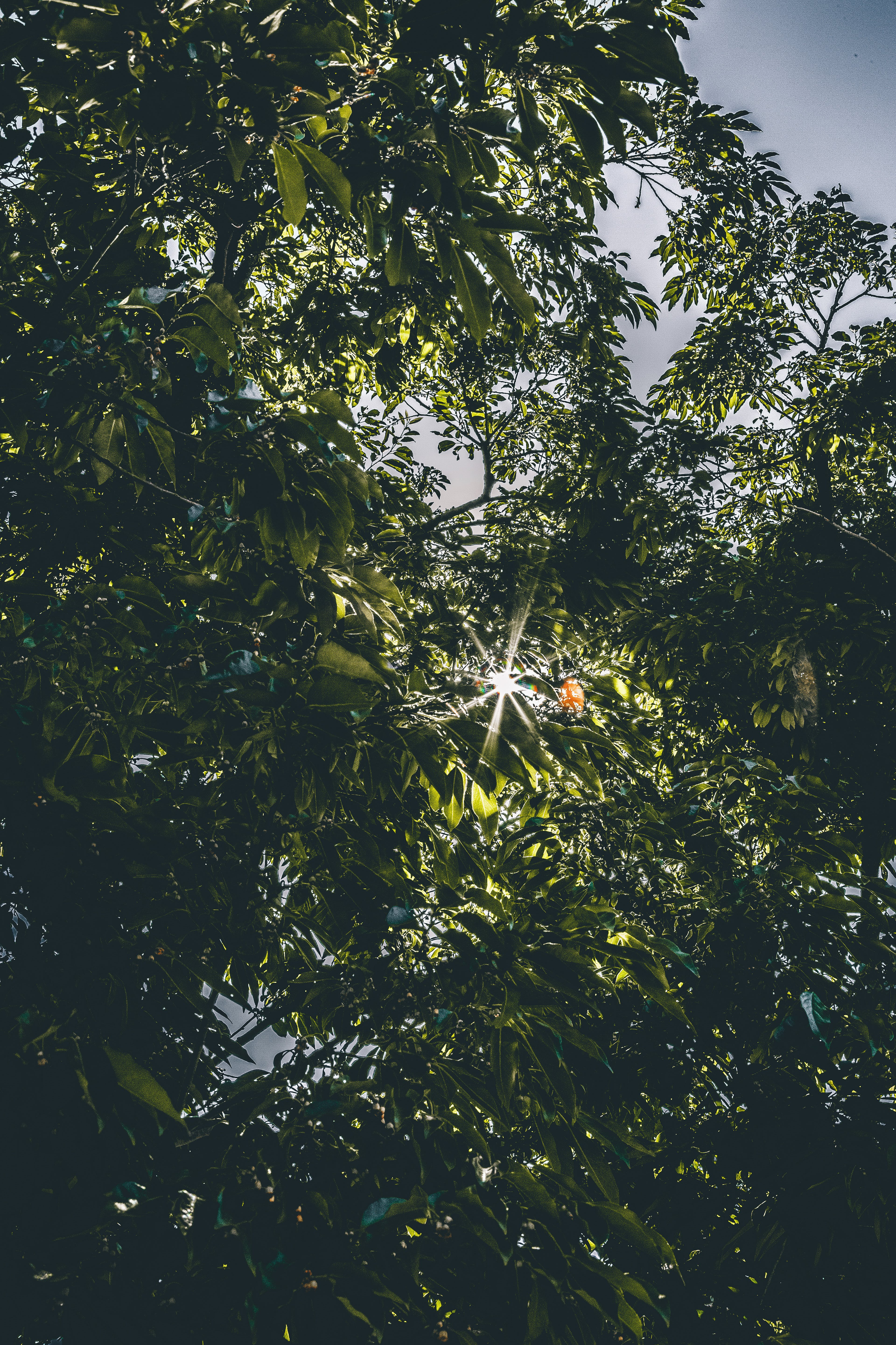Worms Eye Photography of Green Leafed Tree With Sunlight