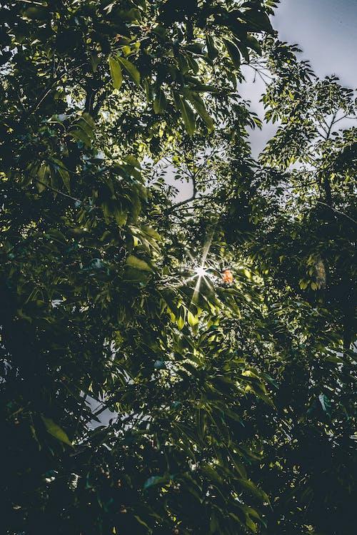 Worms Eye Photography Von Green Leafed Tree Mit Sonnenlicht