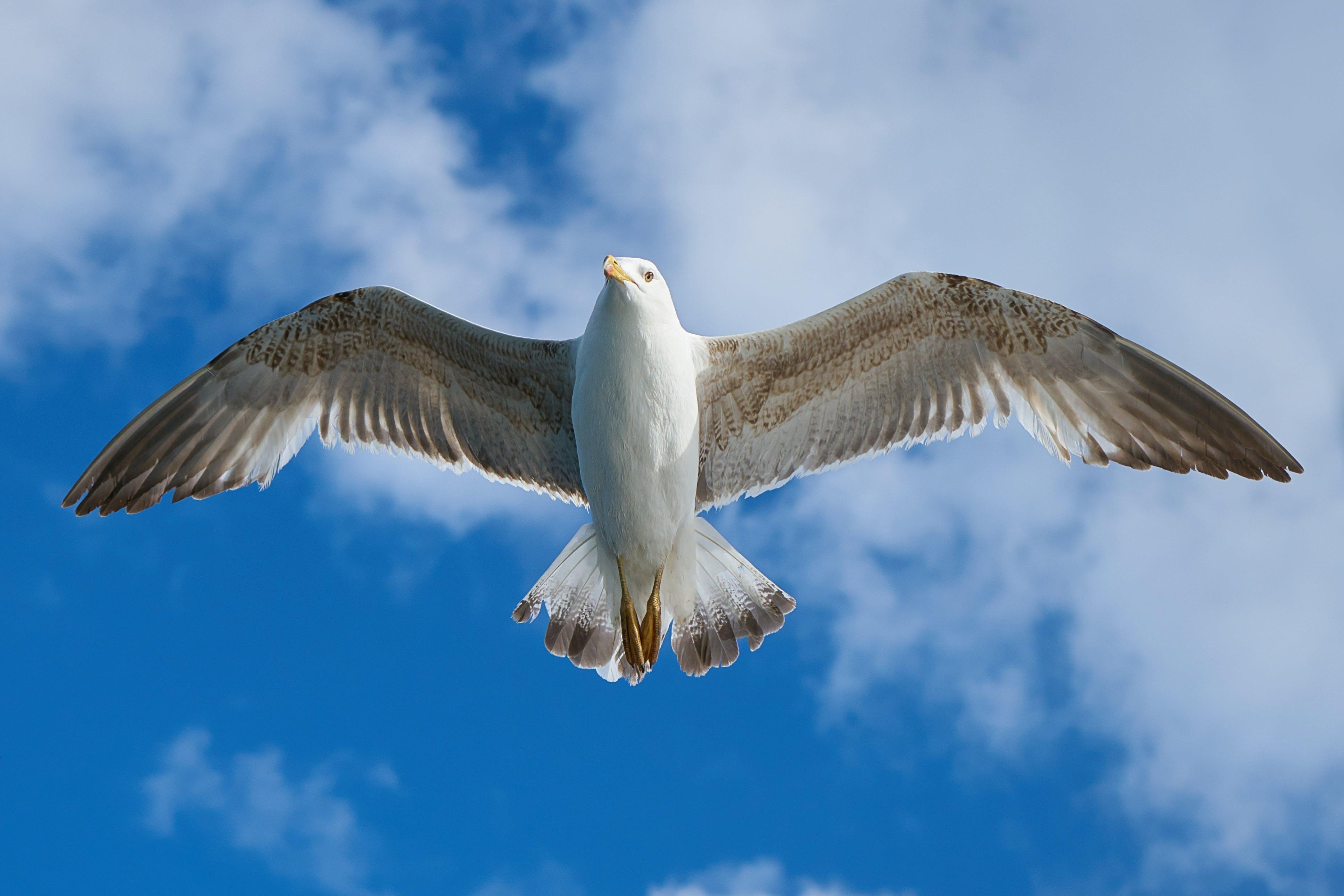 Darmowe zdjęcie z galerii z dzika przyroda, latanie, lot, niebo