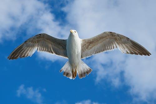 Kostenloses Stock Foto zu feder, fliegen, flug, flügel