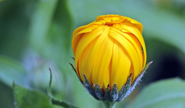 Yellow Flower Bud during Day Time