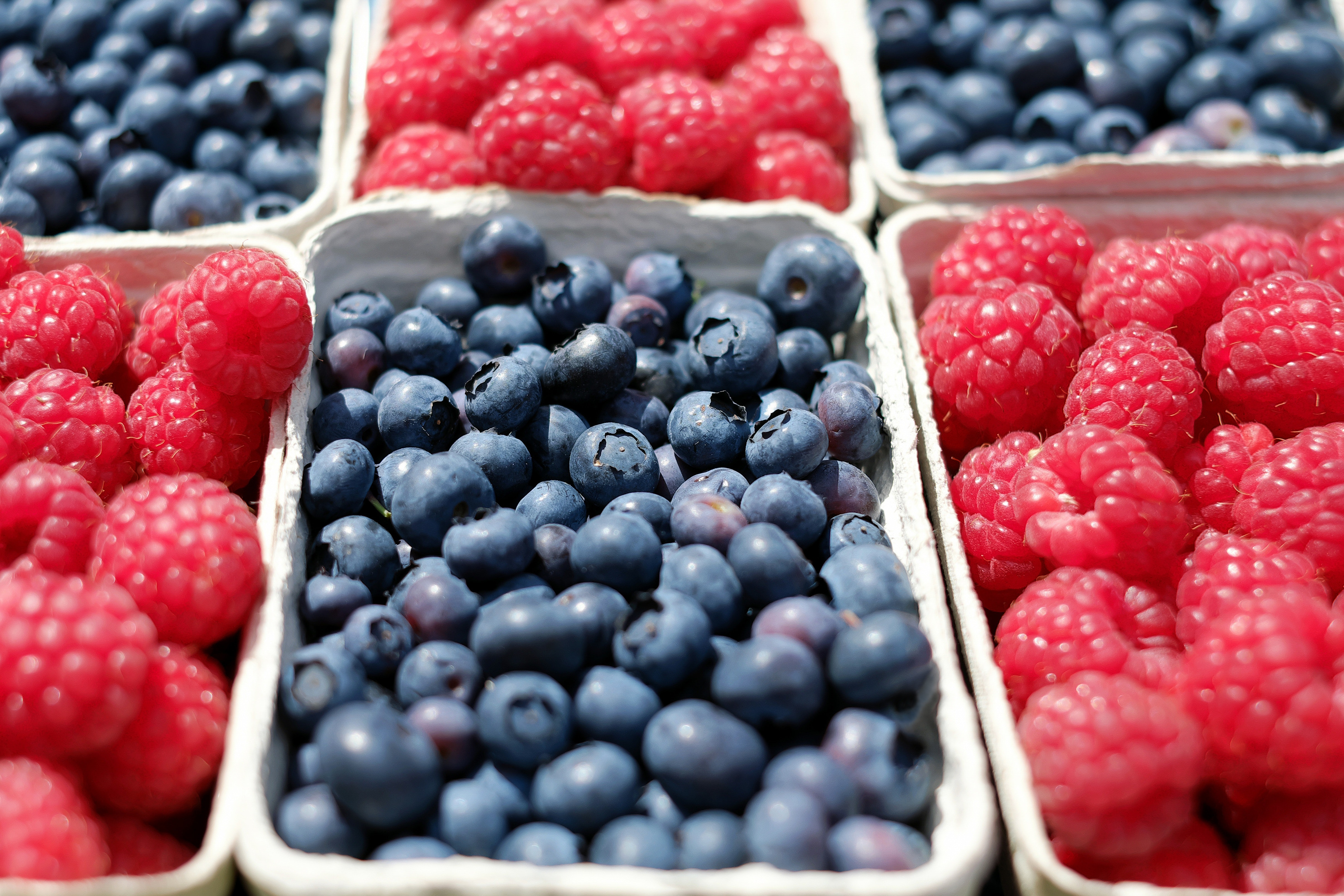 free stock photo of berries blue blueberries