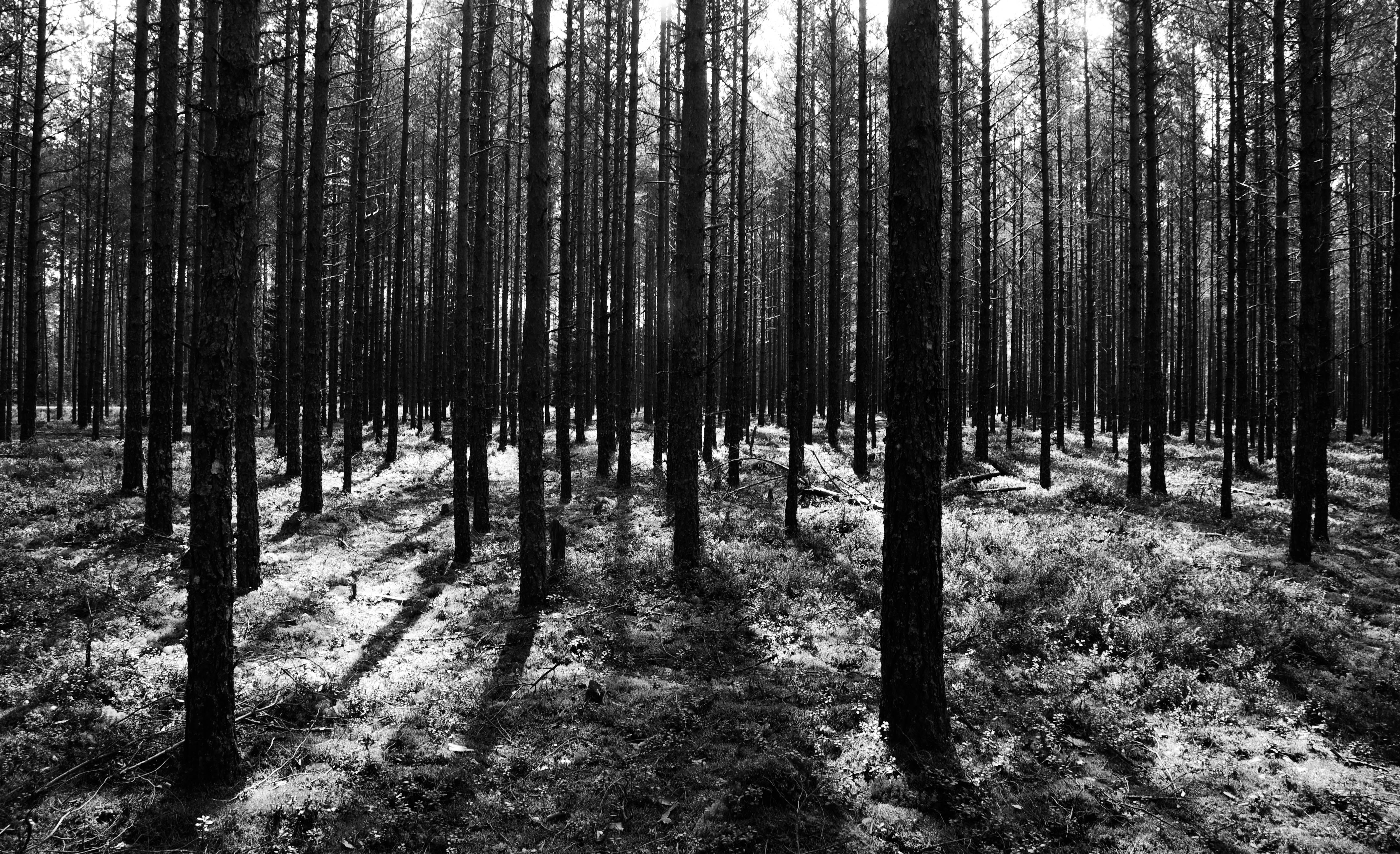 Grayscale Photography Of Forest