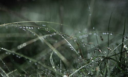 Gratis stockfoto met close-up, dauw, druppels water, gras