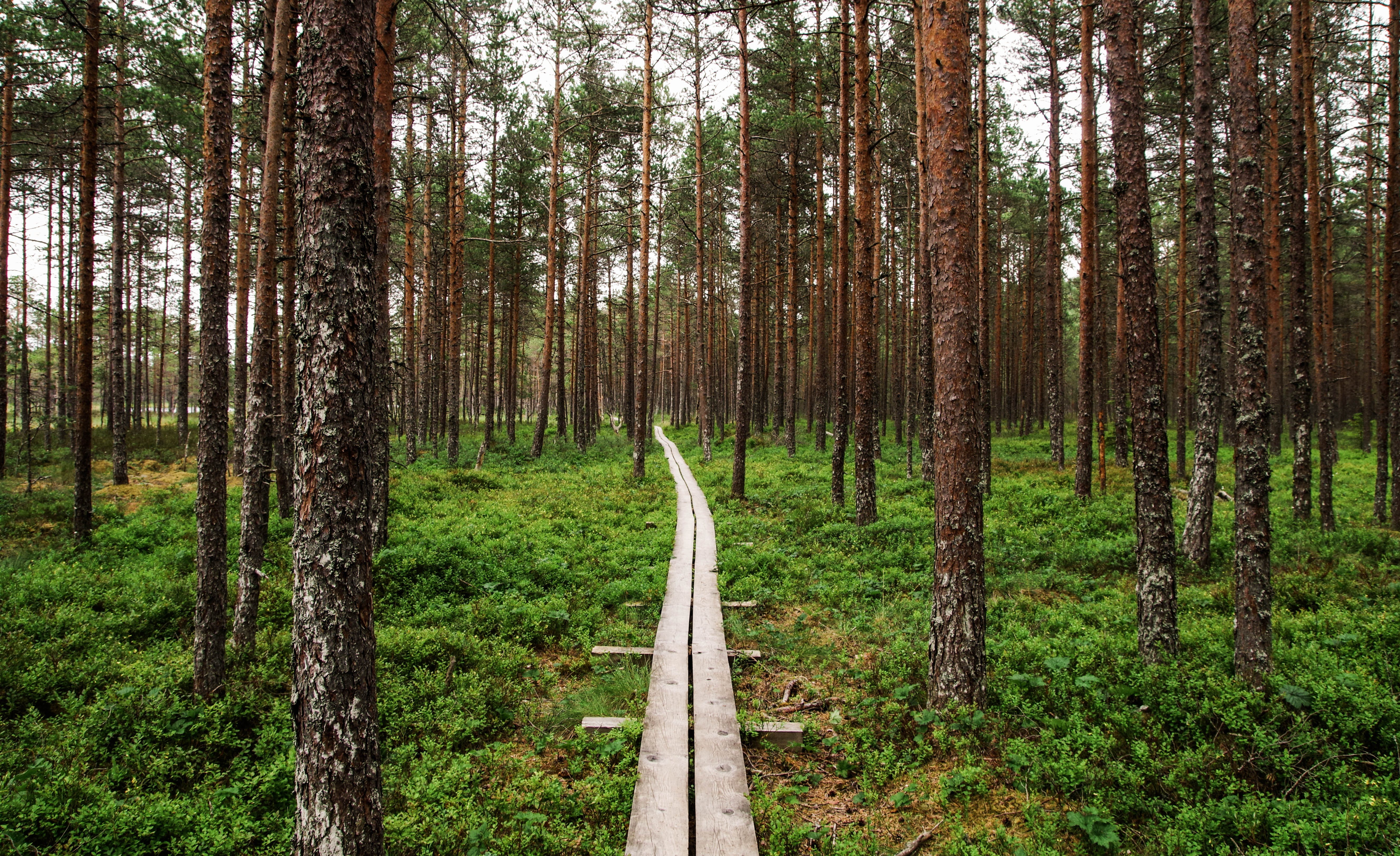 View of Wooden Pathway Inside Forest