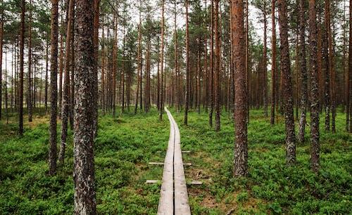 Ilmainen kuvapankkikuva tunnisteilla kasvu, kesä, luonto, maisema