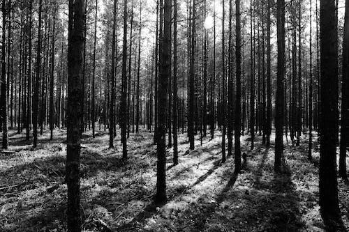 Gratis stockfoto met bomen, Bos, bossen, daglicht