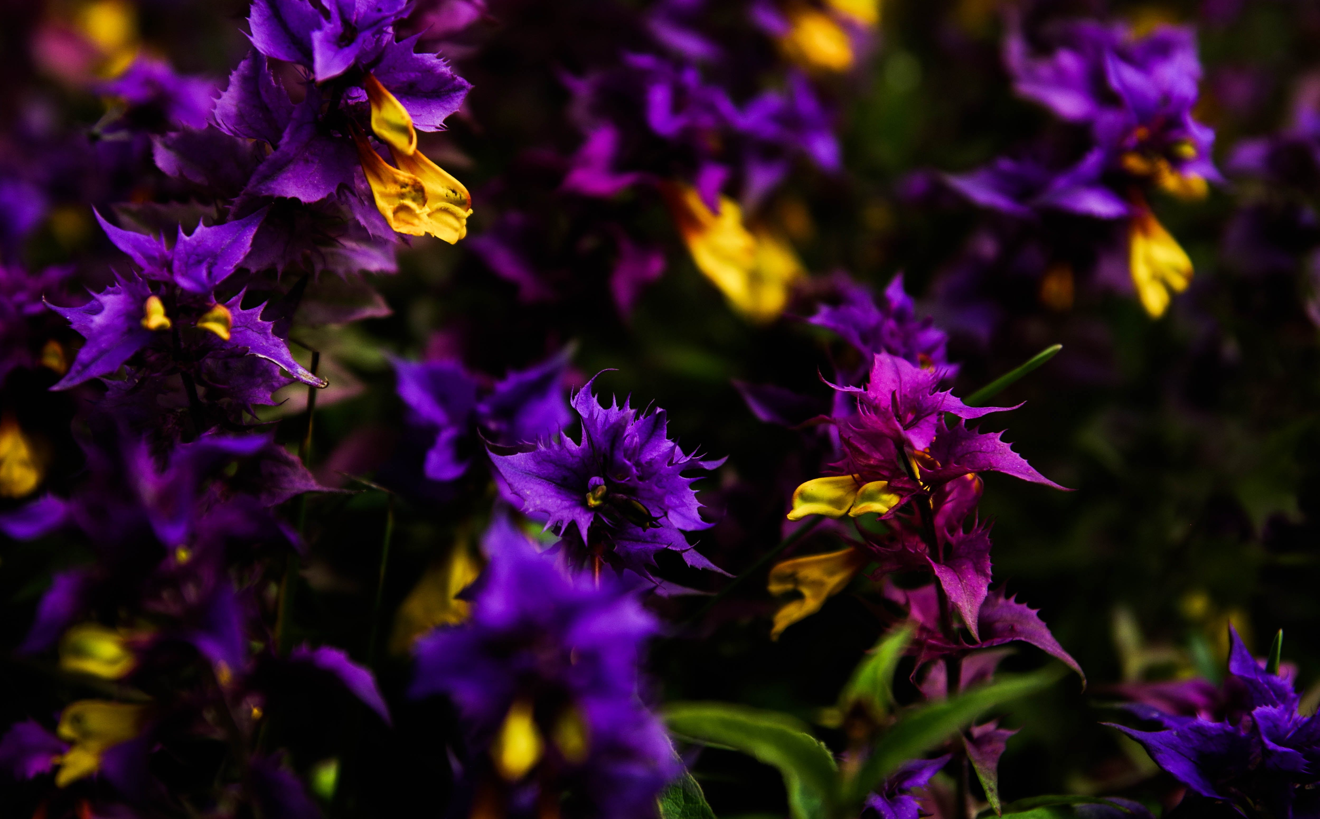 Purple and Yellow Petaled Flowers Photography