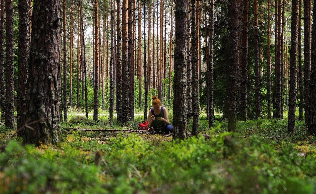 drzewa, kobieta, las