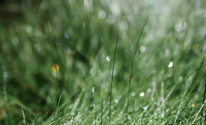 물방울, 이슬, 잔디