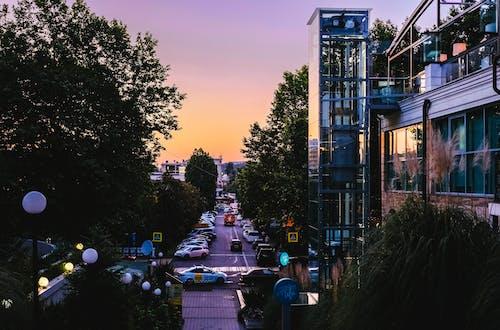 ağaçlar, akşam, arabalar, binalar içeren Ücretsiz stok fotoğraf