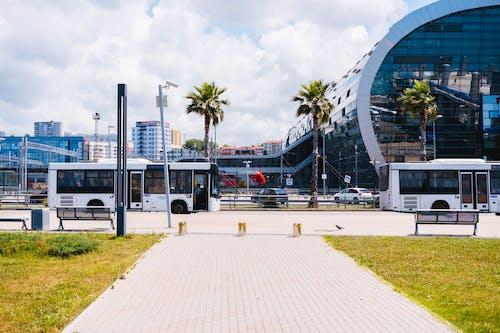 Foto d'estoc gratuïta de arquitectura, autobusos, carrer, carretera