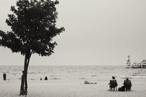 #나무, 바다의 무료 스톡 사진