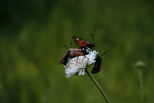Gratis arkivbilde med #nature #bugs #flower #green